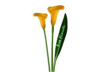 Arum Fleuriste