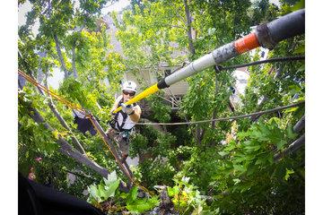 Arboquébec à Longueuil: Élagage d'arbre