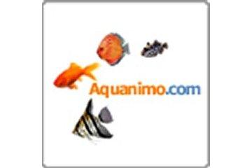 Aquanimo in Québec: Aquanimo