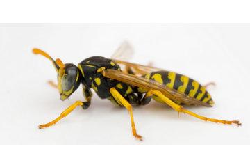 Exterminateur Montréal à Montréal: Nous exterminerons les nids de guepes facilement