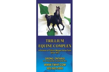 Trillium Morgan Horse Farm
