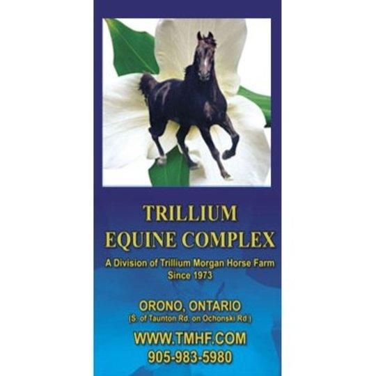 Trillium Morgan Horse Farm Orono On Ourbis