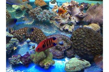 Animalerie Safari in Granby: Aquarium eau douce