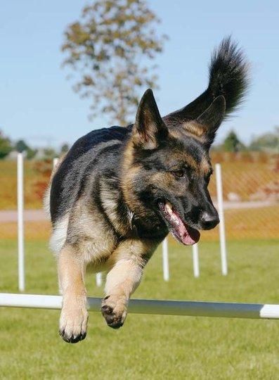 Black Dog Pet Resort Bowmanville On