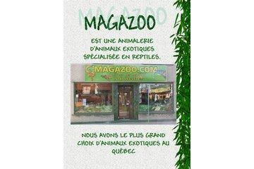Magazoo L'Univers Des Reptiles