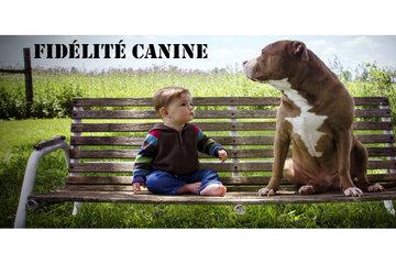 Fidélité Canine