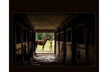 Photographie Marc Bailey in Sherbrooke: Photographe mariage sherbrooke animaux cheval