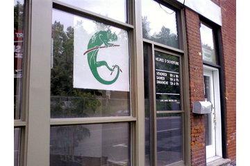 Caméléon Vert Plantes Tropicales Inc à Montréal