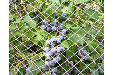 Dubois Agrinovation in Saint-Rémi: white bird netting on structure