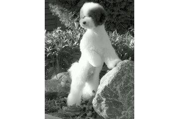 Natasha's Dog Grooming