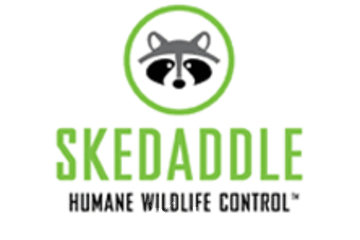 Animal Control Ottawa | Skedaddle Humane Wildlife Control