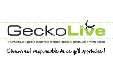 Geckolive