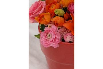 Vivio Flowers