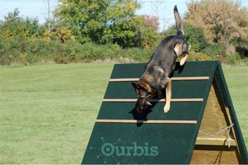 Shield K9 Dog Training in Cambridge: Dog trainer Guelph