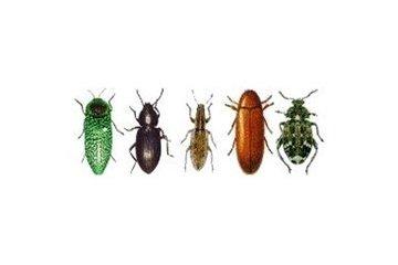 #1 pest control