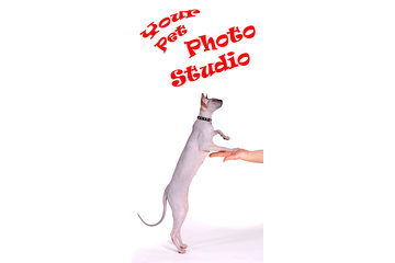 Happy Dog Grooming Salon à Scarborough: Pet Photo Service