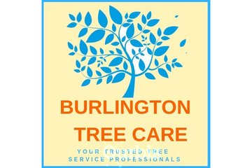 Burlington Tree Care in BURLINGTON