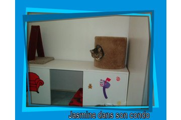 Garderie & Toilettage Des 4 Pattes in Chambly