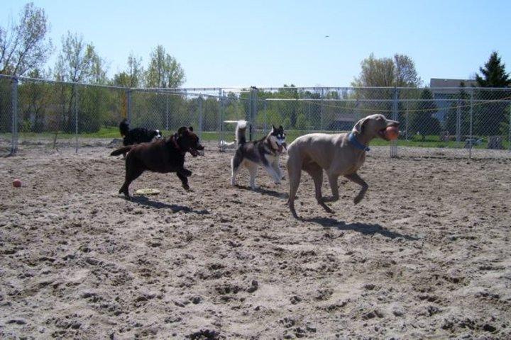 Black Dog Resort Bowmanville