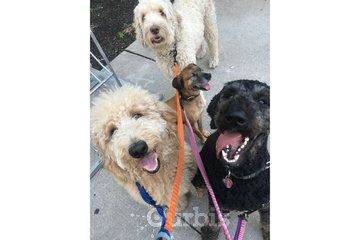 Urban   Tail Dog Walking & Pet Services