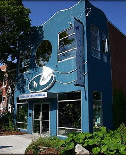 Kitchen Gallery Jean Talon: Aquarius Poissons Tropicaux, Montréal QC