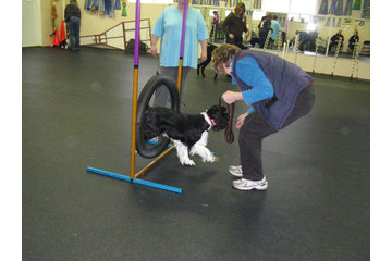 TNT Kennels in Abbotsford: pet beginner class