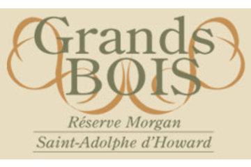 Grands Bois de la Réserve Morgan