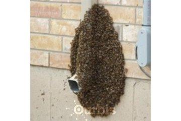ICE Pest Control & Wildlife