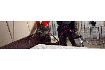 Alerte Punaise de Lit in Montreal: Punaise de lit exterminateur chambre Montréal