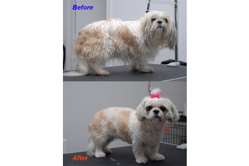 Happy Dog Grooming Salon à Scarborough: Before & After