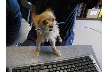 Animal 911 Hôpital Vétérinaire à Roxboro: our receptionist awaits your call/nos receptioniste attend votre appel
