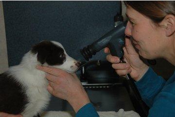 Aldor Veterinary Clinic Ltd à Milner