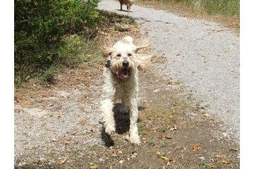 Regal Dogs Resort