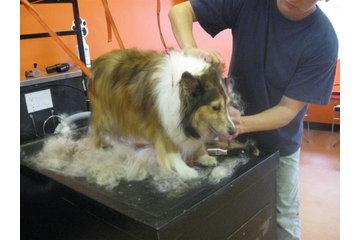 Animazing 15 Minute Pet Bath Center
