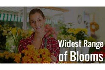 Veronica Flowers Shop in Calgary: Range of Blooms