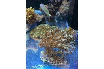 Animalerie Safari in Granby: Matériel d'aquariophilie