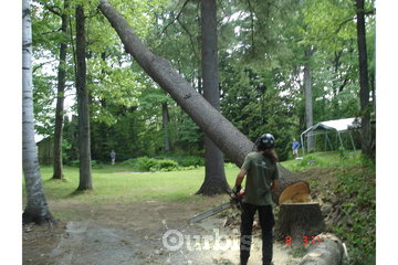 Services d'arbres Gamelin