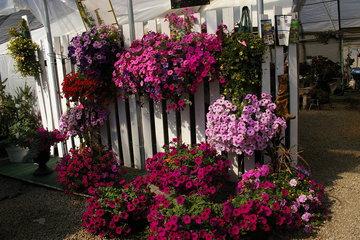 Alcrest Garden Centre- Palmer Greenhouse in Creston: Wave Pots
