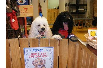 Klips Pet Grooming & Boutique