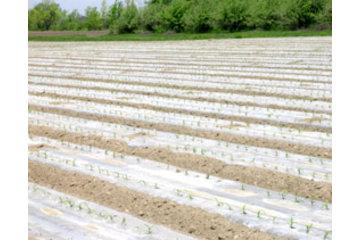 Dubois Agrinovation in Saint-Rémi: clear mulch