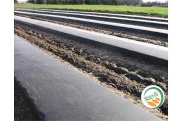 Dubois Agrinovation in Saint-Rémi: biodegradable mulch film