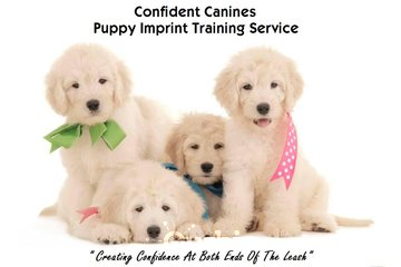Confident Canines