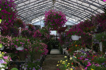 Alcrest Garden Centre- Palmer Greenhouse in Creston: Flowers Galore!