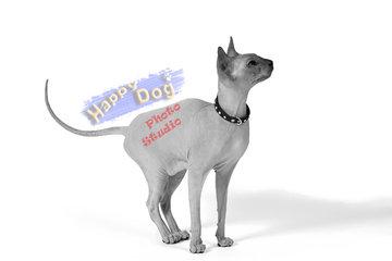 Happy Dog Grooming Salon in Scarborough: Happy Dog Photo Studio