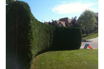 Artizan Horticulture in Kamloops: Hedges