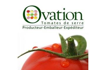 Ovation - Tomates de serre