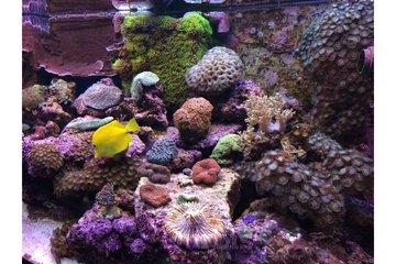 Animalerie Safari in Granby: Aquarium eau salée Saint-Jean-sur-Richelieu