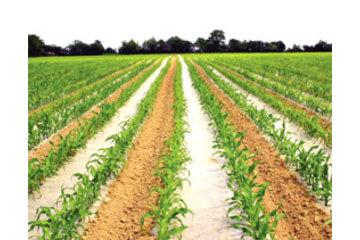 Dubois Agrinovation in Saint-Rémi: acitmais - corn mulch film