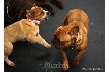 PAWS Dog Daycare in Calgary