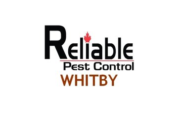Pest Control Whitby
